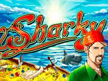 Sharky в клубе на деньги